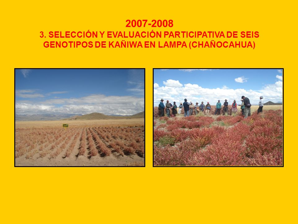 2007-2008 3. SELECCIÓN Y EVALUACIÓN PARTICIPATIVA DE SEIS GENOTIPOS DE KAÑIWA EN LAMPA (CHAÑOCAHUA)