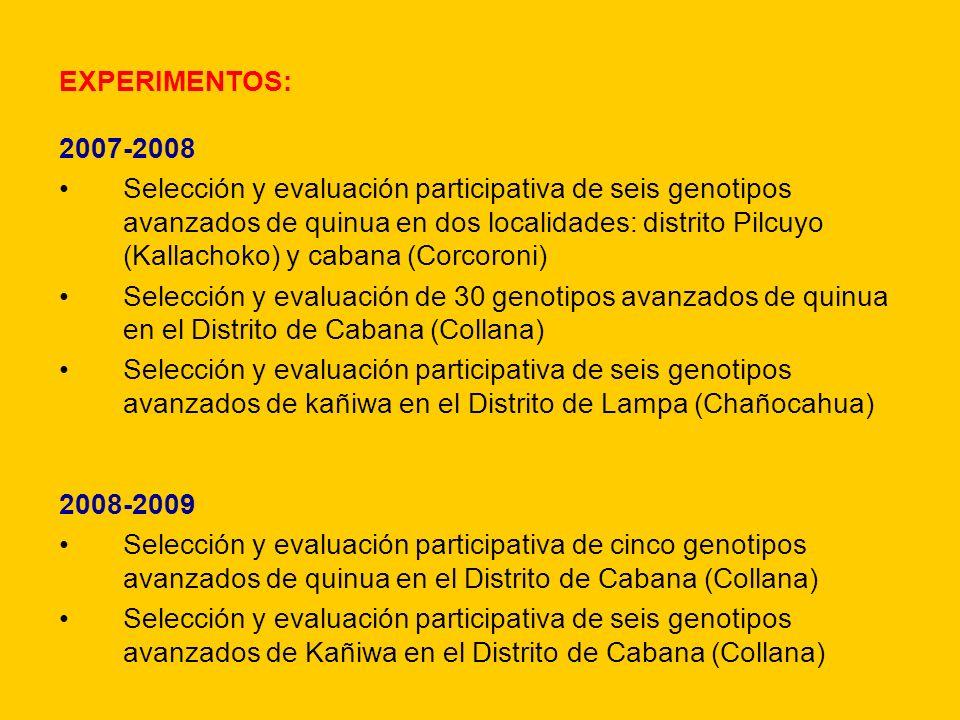 EXPERIMENTOS: 2007-2008 Selección y evaluación participativa de seis genotipos avanzados de quinua en dos localidades: distrito Pilcuyo (Kallachoko) y
