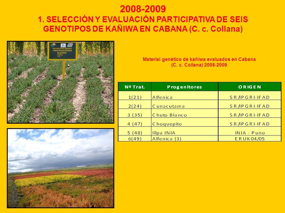 2008-2009 1. SELECCIÓN Y EVALUACIÓN PARTICIPATIVA DE SEIS GENOTIPOS DE KAÑIWA EN CABANA (C. c. Collana) Material genético de kañiwa evaluados en Caban