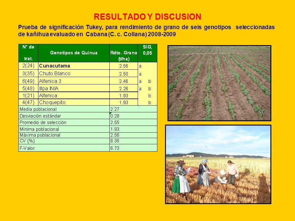 RESULTADO Y DISCUSION Prueba de significación Tukey, para rendimiento de grano de seis genotipos seleccionadas de kañihua evaluado en Cabana (C. c. Co