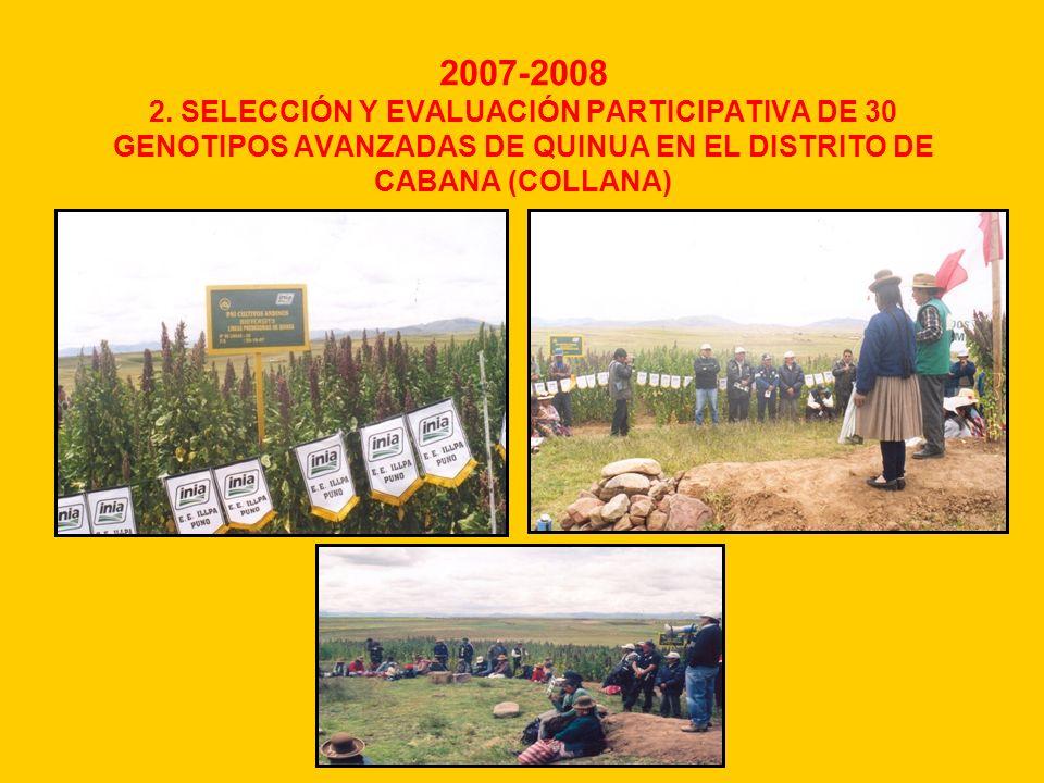 2007-2008 2. SELECCIÓN Y EVALUACIÓN PARTICIPATIVA DE 30 GENOTIPOS AVANZADAS DE QUINUA EN EL DISTRITO DE CABANA (COLLANA)