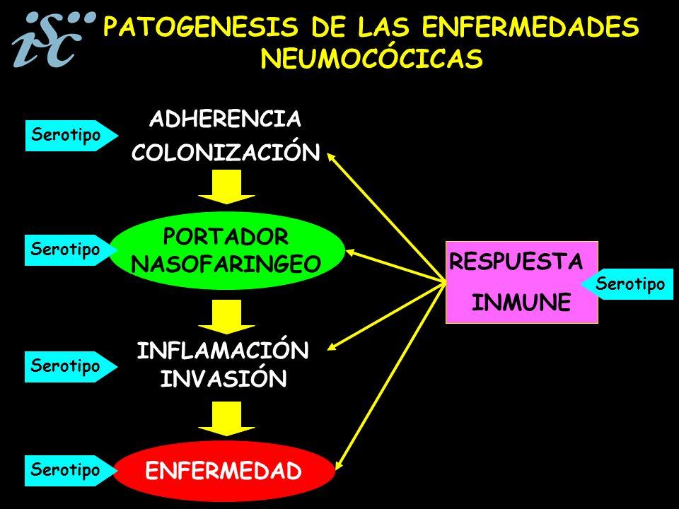 PORTADOR NASOFARINGEO COLONIZACIÓN ADHERENCIA INVASIÓN ENFERMEDAD INFLAMACIÓN PATOGENESIS DE LAS ENFERMEDADES NEUMOCÓCICAS RESPUESTA INMUNE Serotipo