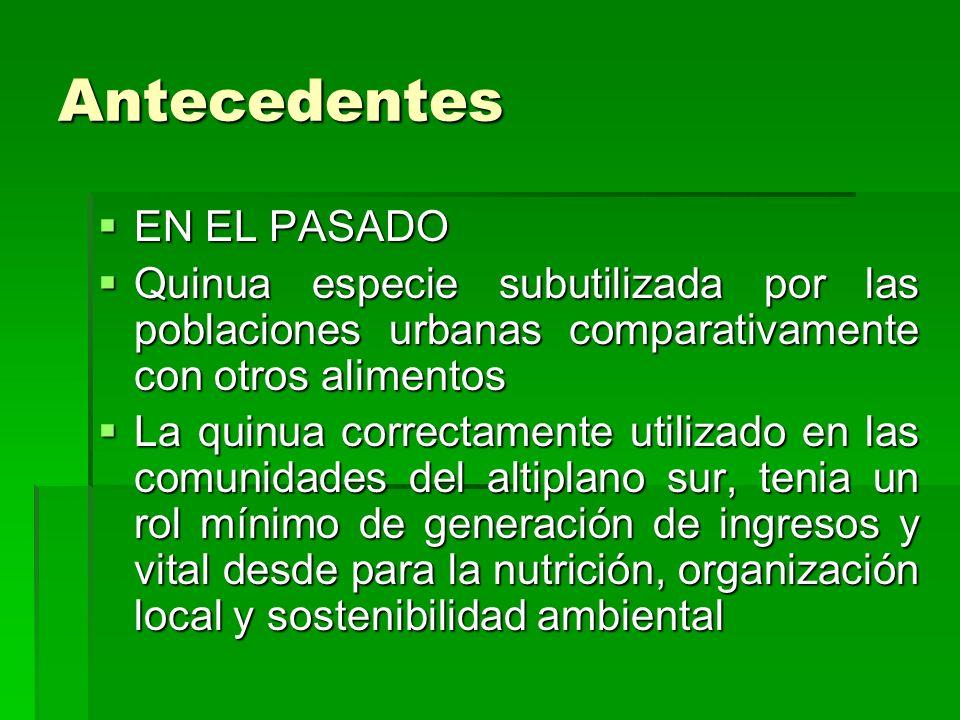 Antecedentes EN EL PASADO EN EL PASADO Quinua especie subutilizada por las poblaciones urbanas comparativamente con otros alimentos Quinua especie sub