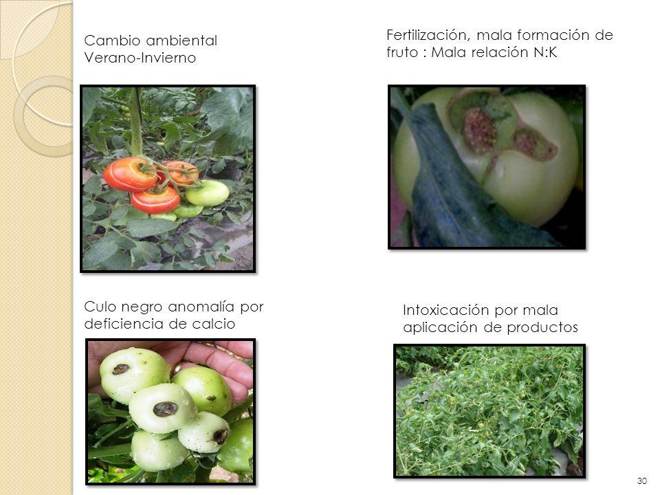 Cambio ambiental Verano-Invierno Fertilización, mala formación de fruto : Mala relación N:K Culo negro anomalía por deficiencia de calcio Intoxicación