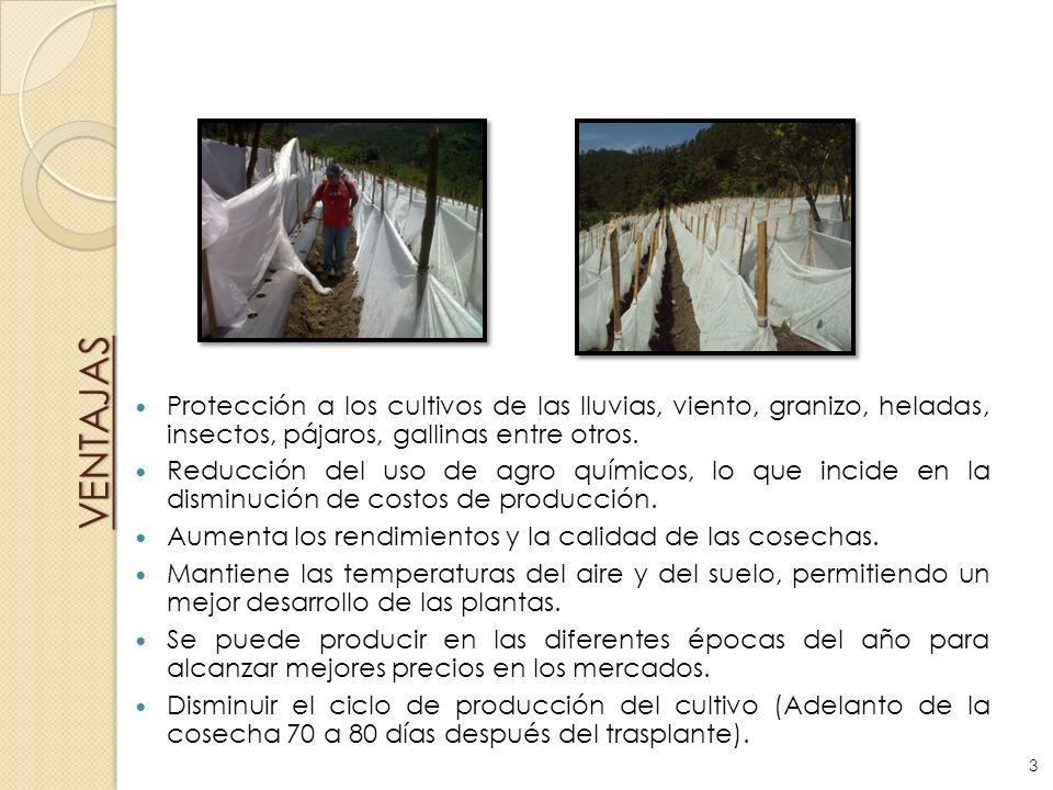 VENTAJAS Protección a los cultivos de las lluvias, viento, granizo, heladas, insectos, pájaros, gallinas entre otros. Reducción del uso de agro químic