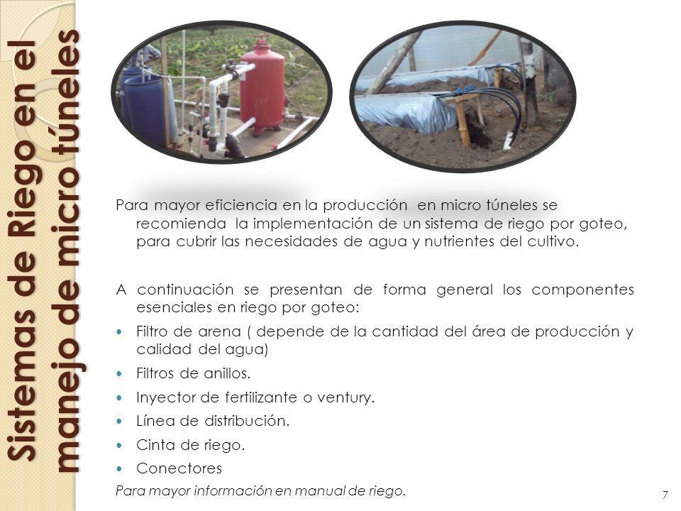 Sistemas de Riego en el manejo de micro túneles Para mayor eficiencia en la producción en micro túneles se recomienda la implementación de un sistema