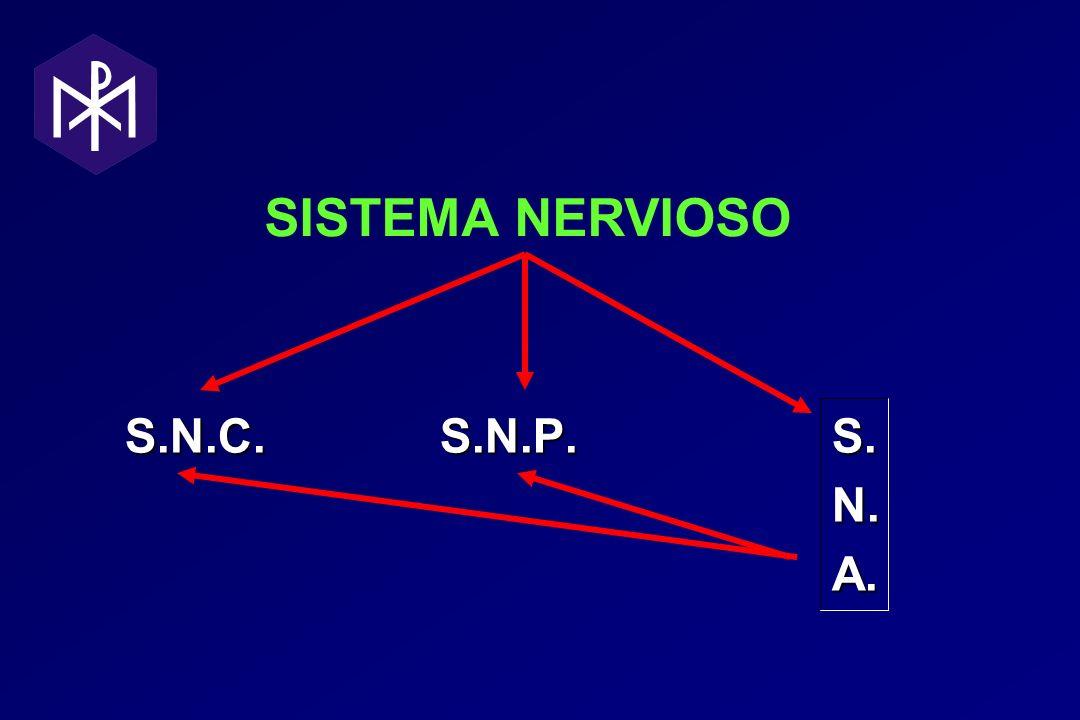 SISTEMA NERVIOSO S.N.C. S.N.P. S. N. N. A. A.