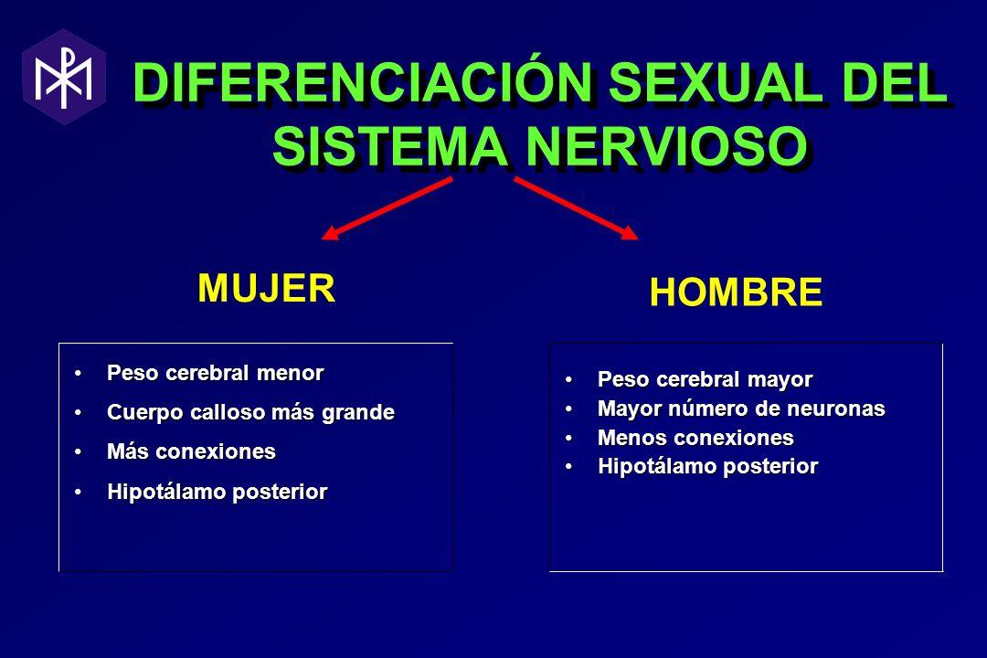 DIFERENCIACIÓN SEXUAL DEL SISTEMA NERVIOSO Peso cerebral menorPeso cerebral menor Cuerpo calloso más grandeCuerpo calloso más grande Más conexionesMás