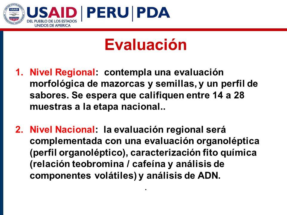 Evaluación 1.Nivel Regional: contempla una evaluación morfológica de mazorcas y semillas, y un perfil de sabores.