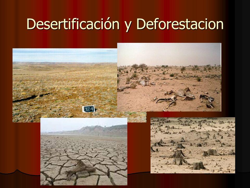 Desertificación y Deforestacion