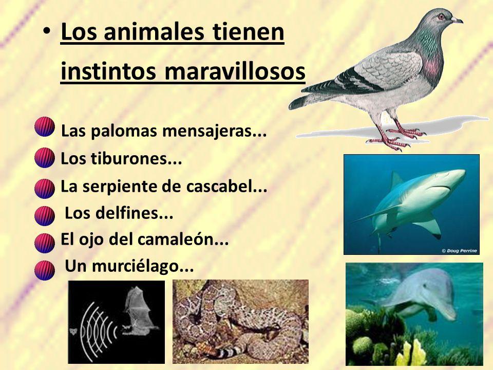 Los animales tienen instintos maravillosos - Las palomas mensajeras... -Los tiburones... -La serpiente de cascabel... - Los delfines... -El ojo del ca