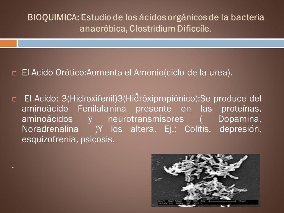 BIOQUIMICA: Estudio de los ácidos orgánicos de la bacteria anaeróbica, Clostridium Dificcíle. El Acido Orótico:Aumenta el Amonio(ciclo de la urea). El