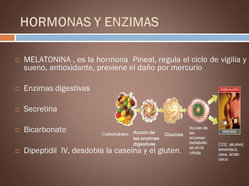 HORMONAS Y ENZIMAS MELATONINA, es la hormona Pineal, regula el ciclo de vigilia y sueno, antioxidante, previene el daño por mercurio Enzimas digestiva