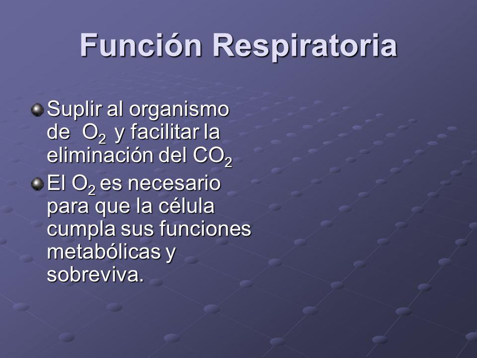 Función Respiratoria El metabolismo aeróbico es posible a través de cuatro procesos que involucran al sistema respiratorio y cardiovascular: Ventilación Ventilación Oxigenación arterial Oxigenación arterial Transporte de oxígeno Transporte de oxígeno Extracción y utilización tisular de O 2 Extracción y utilización tisular de O 2