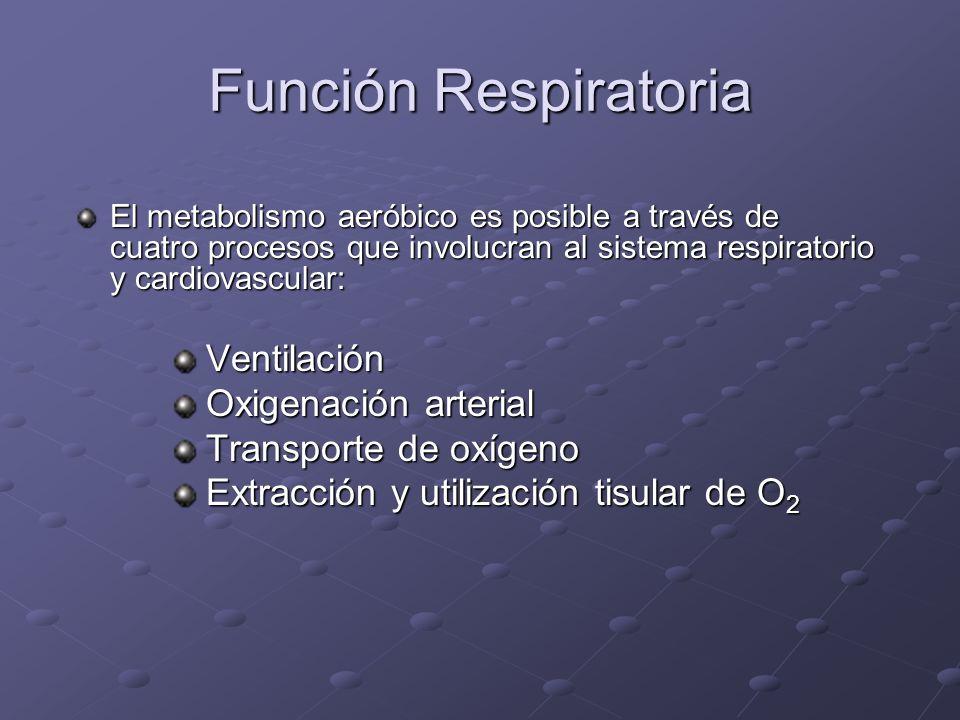 Función Respiratoria El metabolismo aeróbico es posible a través de cuatro procesos que involucran al sistema respiratorio y cardiovascular: Ventilaci