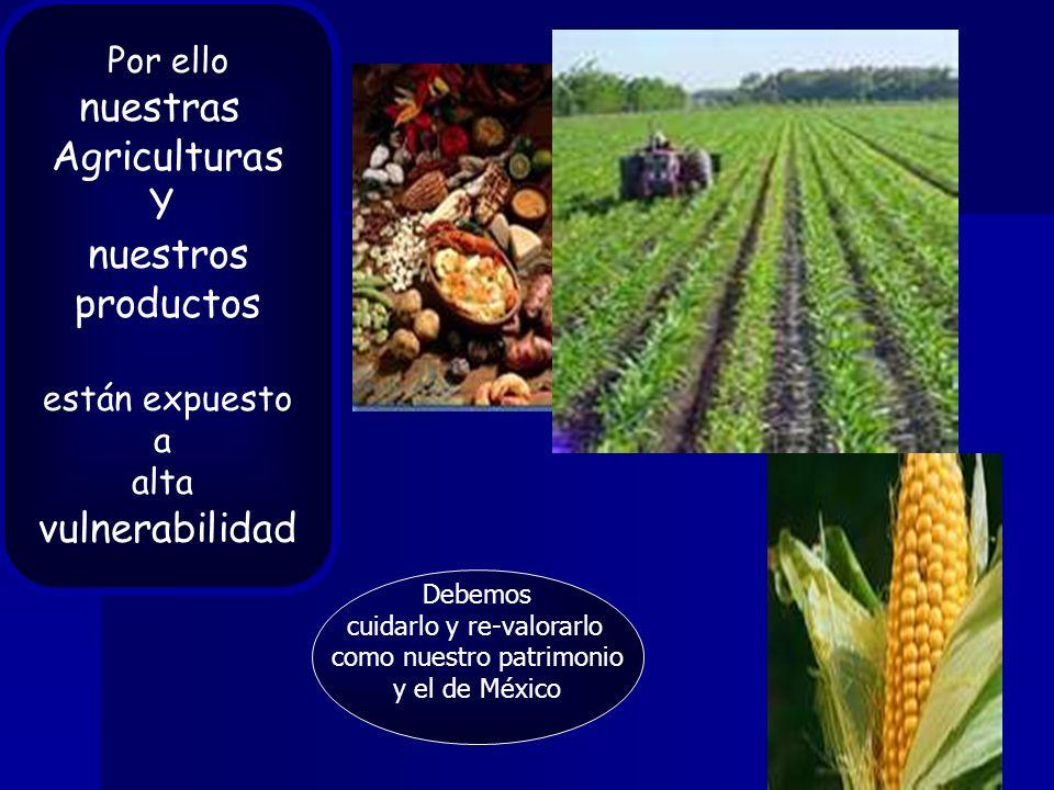 OTROS RETOS DE HOY… -> debate debate <- uso de transgénicos rescate y protección variedades nativas y criollas -> cuestionamiento cuestionamiento <- uso de granos para biocombustiblesy/oalimentos … RETOS POR AFRONTAR … - abasto interno - derecho de todos los mexicanos al acceso equitativo a alimentos decalidad - seguridad alimentaria - agricultura sustentable - agricultura sustentable