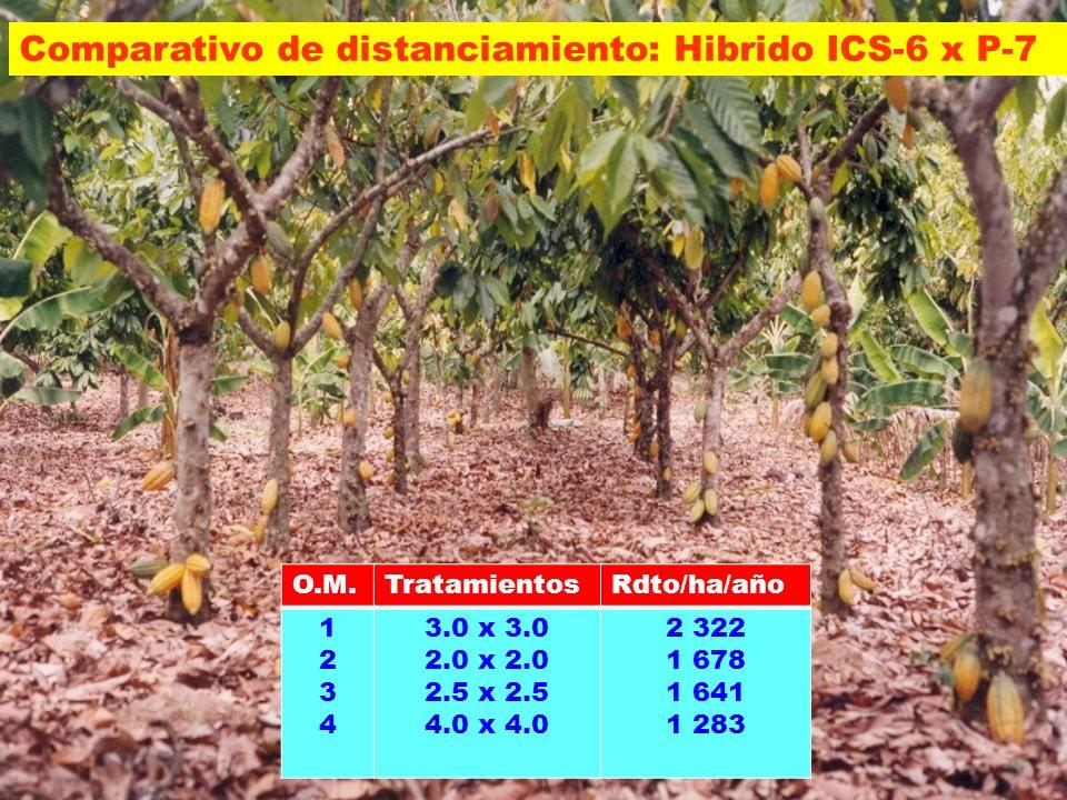 O.M.TratamientosRdto/ha/año 12341234 3.0 x 3.0 2.0 x 2.0 2.5 x 2.5 4.0 x 4.0 2 322 1 678 1 641 1 283 Comparativo de distanciamiento: Hibrido ICS-6 x P