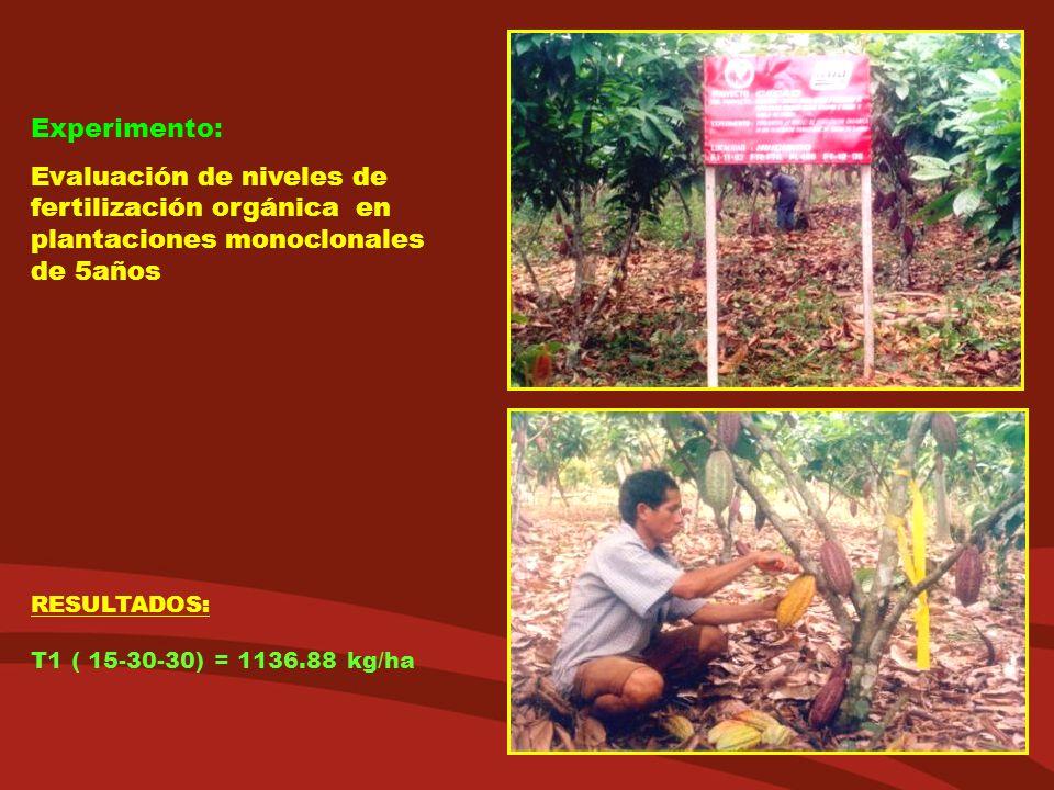 Experimento: Evaluación de niveles de fertilización orgánica en plantaciones monoclonales de 5años RESULTADOS: T1 ( 15-30-30) = 1136.88 kg/ha
