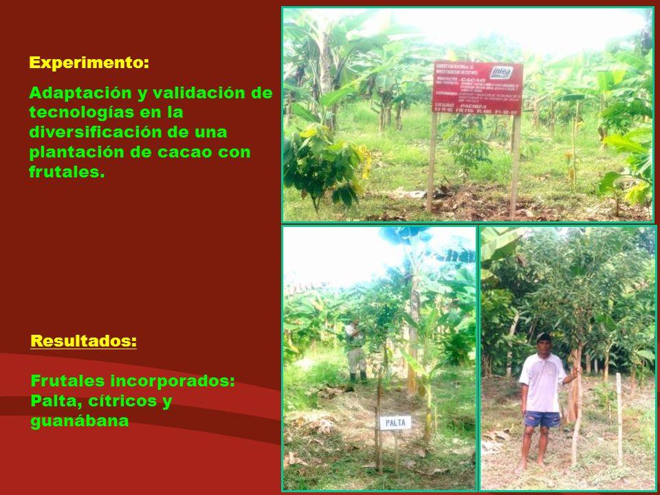 Experimento: Adaptación y validación de tecnologías en la diversificación de una plantación de cacao con frutales. Resultados: Frutales incorporados: