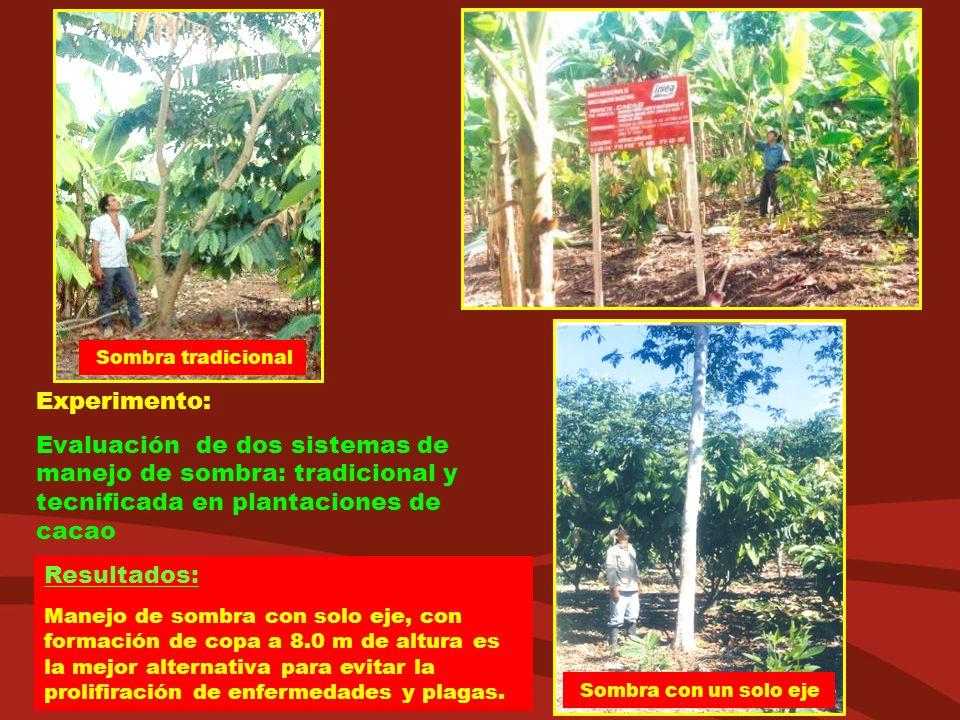 Experimento: Evaluación de dos sistemas de manejo de sombra: tradicional y tecnificada en plantaciones de cacao Resultados: Manejo de sombra con solo