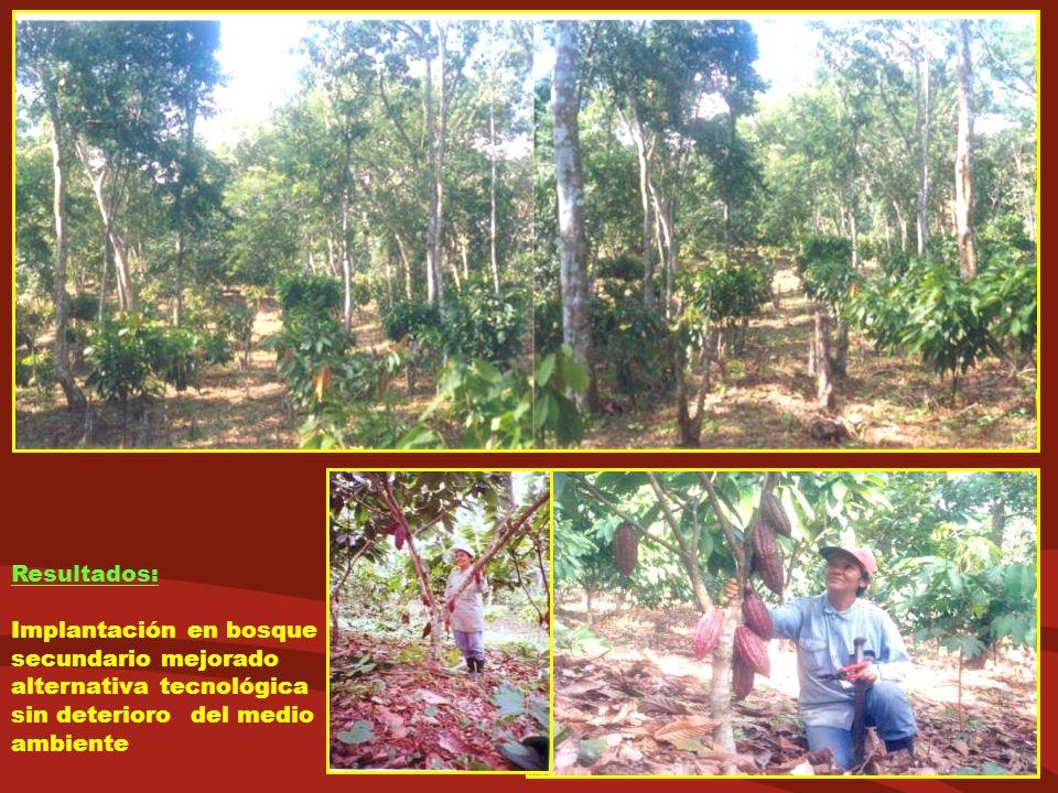 Resultados: Implantación en bosque secundario mejorado alternativa tecnológica sin deterioro del medio ambiente