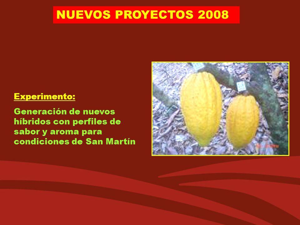 NUEVOS PROYECTOS 2008 Experimento: Generación de nuevos híbridos con perfiles de sabor y aroma para condiciones de San Martín