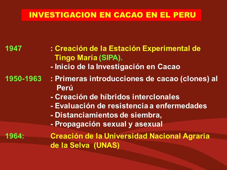 1947 : Creación de la Estación Experimental de Tingo María (SIPA). - Inicio de la Investigación en Cacao 1950-1963: Primeras introducciones de cacao (