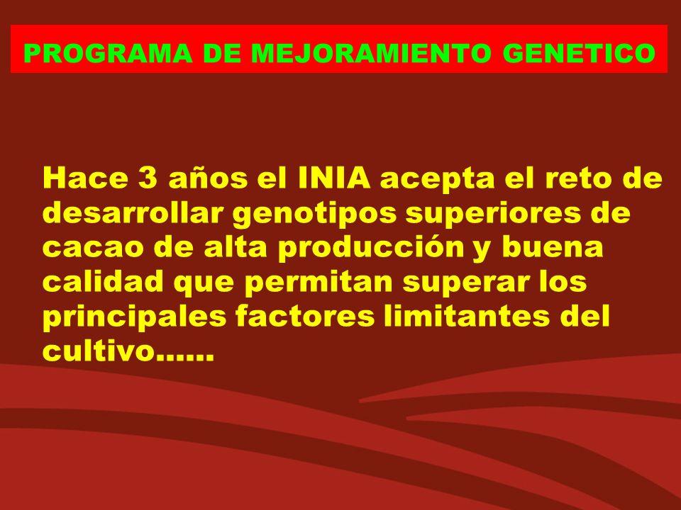 Hace 3 años el INIA acepta el reto de desarrollar genotipos superiores de cacao de alta producción y buena calidad que permitan superar los principale