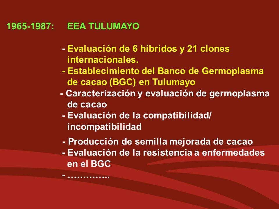 1965-1987: EEA TULUMAYO - Evaluación de 6 híbridos y 21 clones internacionales. - Establecimiento del Banco de Germoplasma de cacao (BGC) en Tulumayo