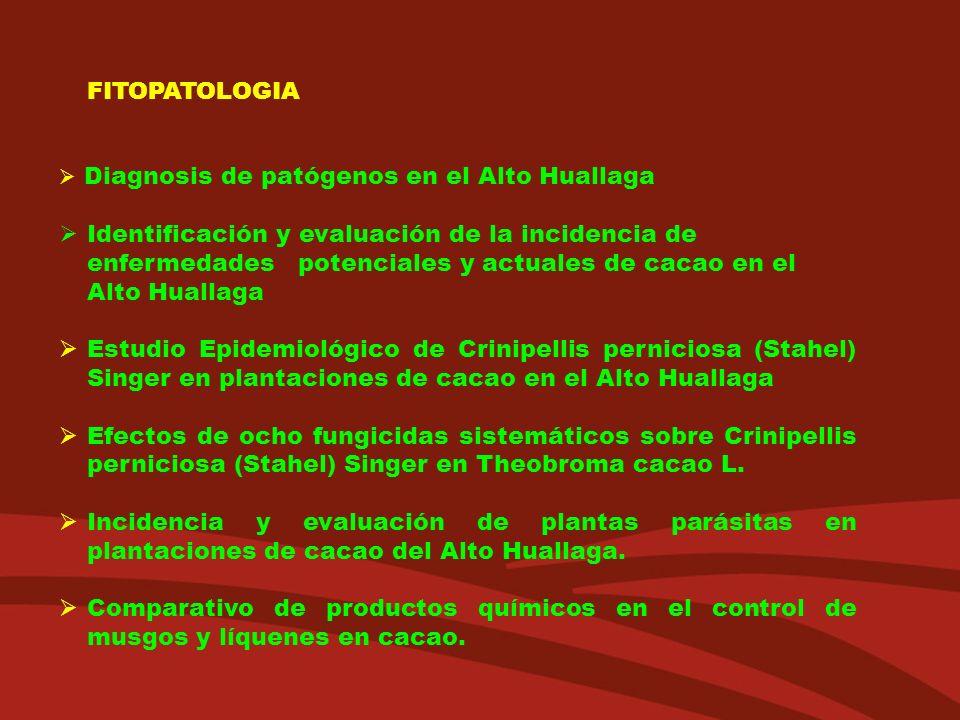 FITOPATOLOGIA Diagnosis de patógenos en el Alto Huallaga Identificación y evaluación de la incidencia de enfermedades potenciales y actuales de cacao