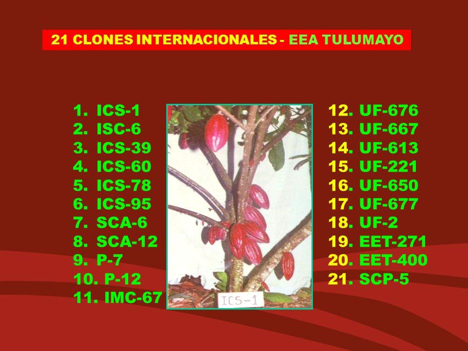 21 CLONES INTERNACIONALES - EEA TULUMAYO 1.ICS-1 12. UF-676 2.ISC-6 13. UF-667 3.ICS-39 14. UF-613 4.ICS-60 15. UF-221 5.ICS-78 16. UF-650 6.ICS-95 17