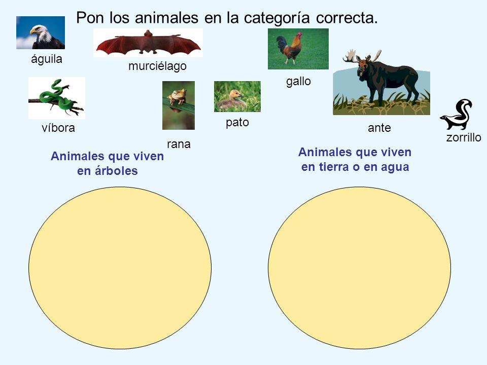 Pon los animales en la categoría correcta. zorrillo pato gallo águila ante Animales que viven en árboles Animales que viven en tierra o en agua víbora