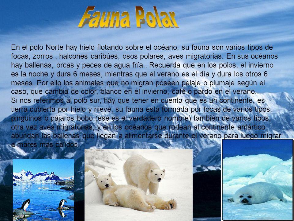 FAUNA En el polo Norte hay hielo flotando sobre el océano, su fauna son varios tipos de focas, zorros, halcones caribúes, osos polares, aves migratori