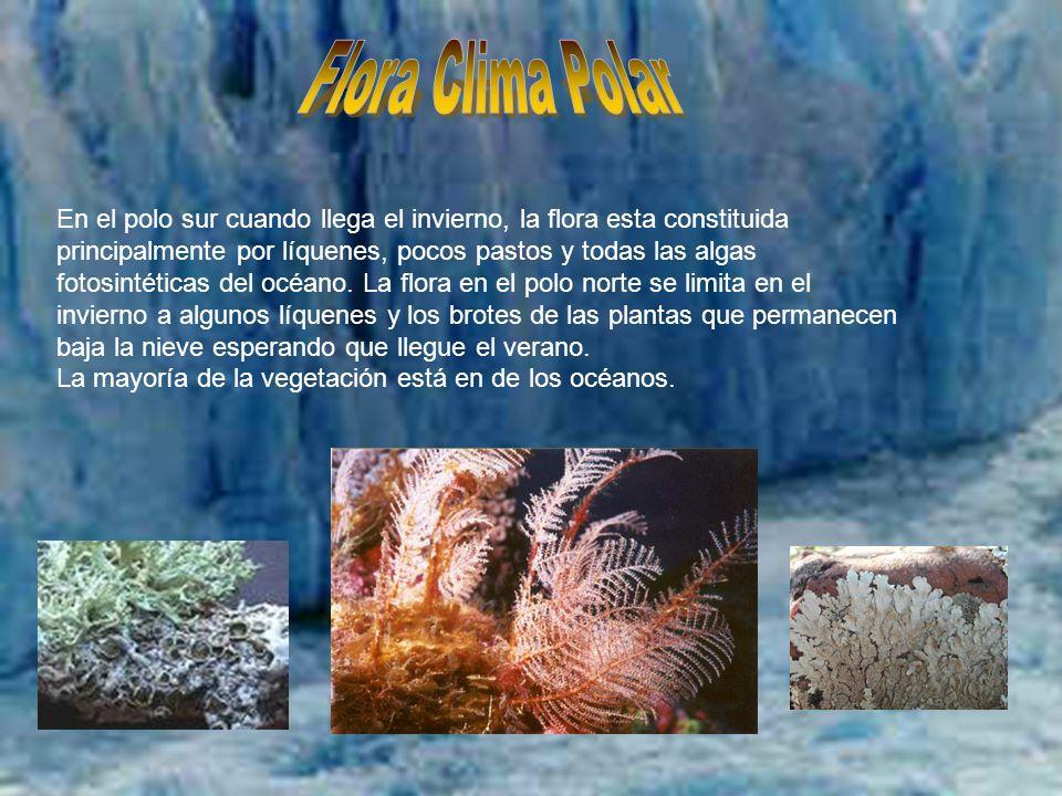 Sergio Cabrera; Sergio Gil; Pablo Godina; Richi Ros. En el polo sur cuando llega el invierno, la flora esta constituida principalmente por líquenes, p