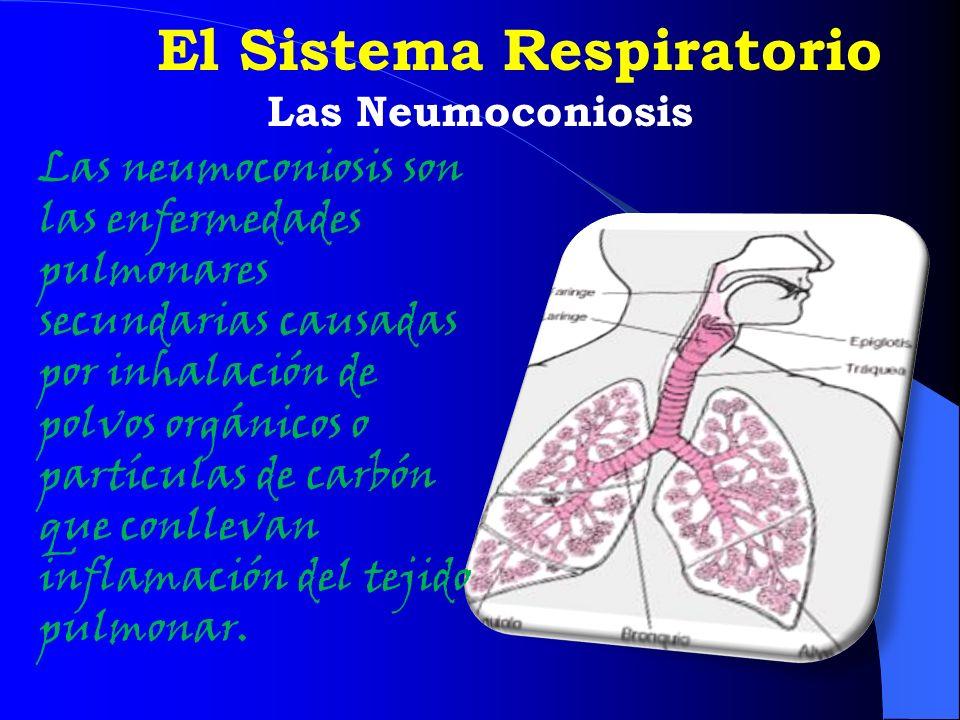 El Sistema Respiratorio Las Neumoconiosis Las neumoconiosis son las enfermedades pulmonares secundarias causadas por inhalación de polvos orgánicos o