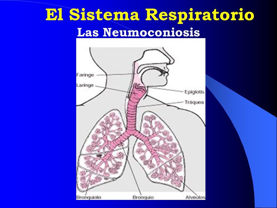 El Sistema Respiratorio Las Neumoconiosis