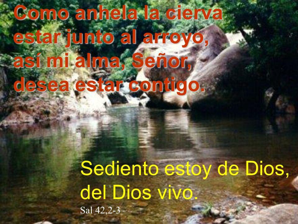 Como anhela la cierva estar junto al arroyo, así mi alma, Señor, desea estar contigo. Sediento estoy de Dios, del Dios vivo. Sal 42,2-3