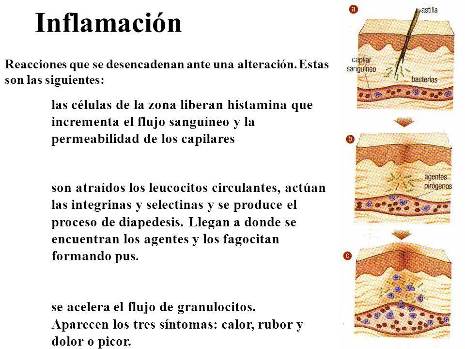 Inflamación Reacciones que se desencadenan ante una alteración. Estas son las siguientes: las células de la zona liberan histamina que incrementa el f