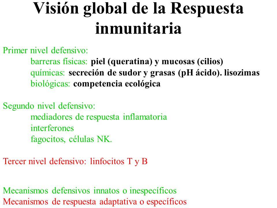 Visión global de la Respuesta inmunitaria Primer nivel defensivo: barreras físicas: piel (queratina) y mucosas (cilios) químicas: secreción de sudor y