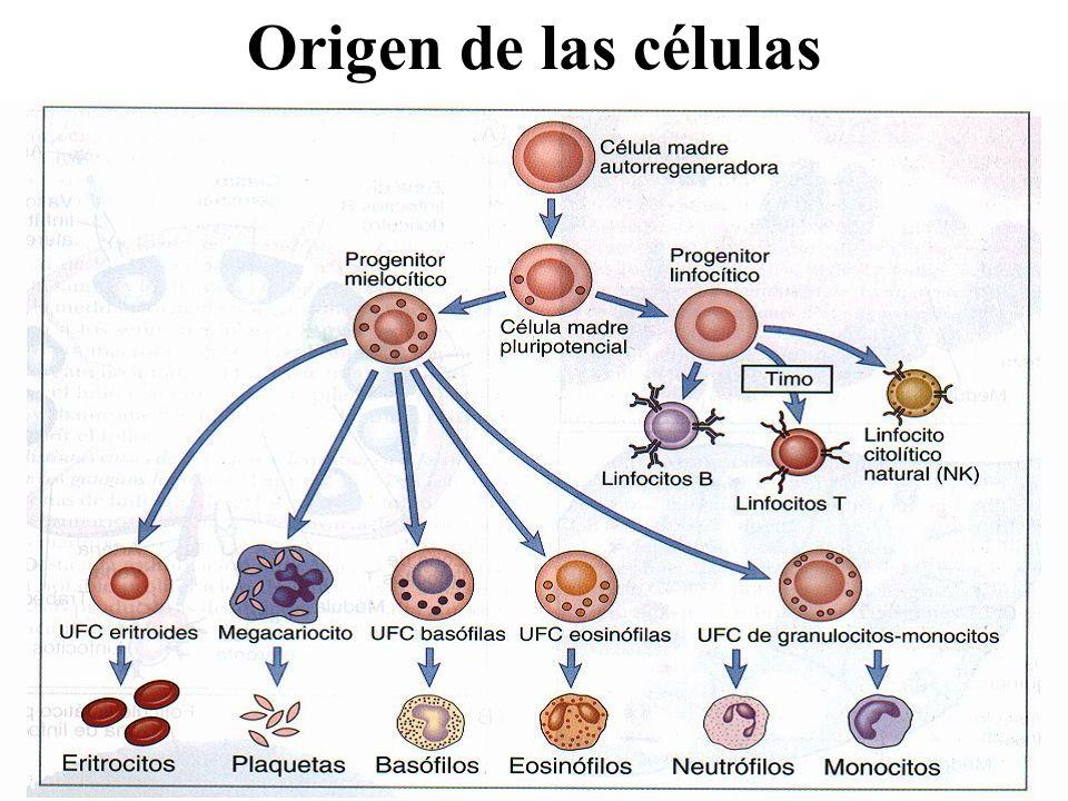 Origen de las células