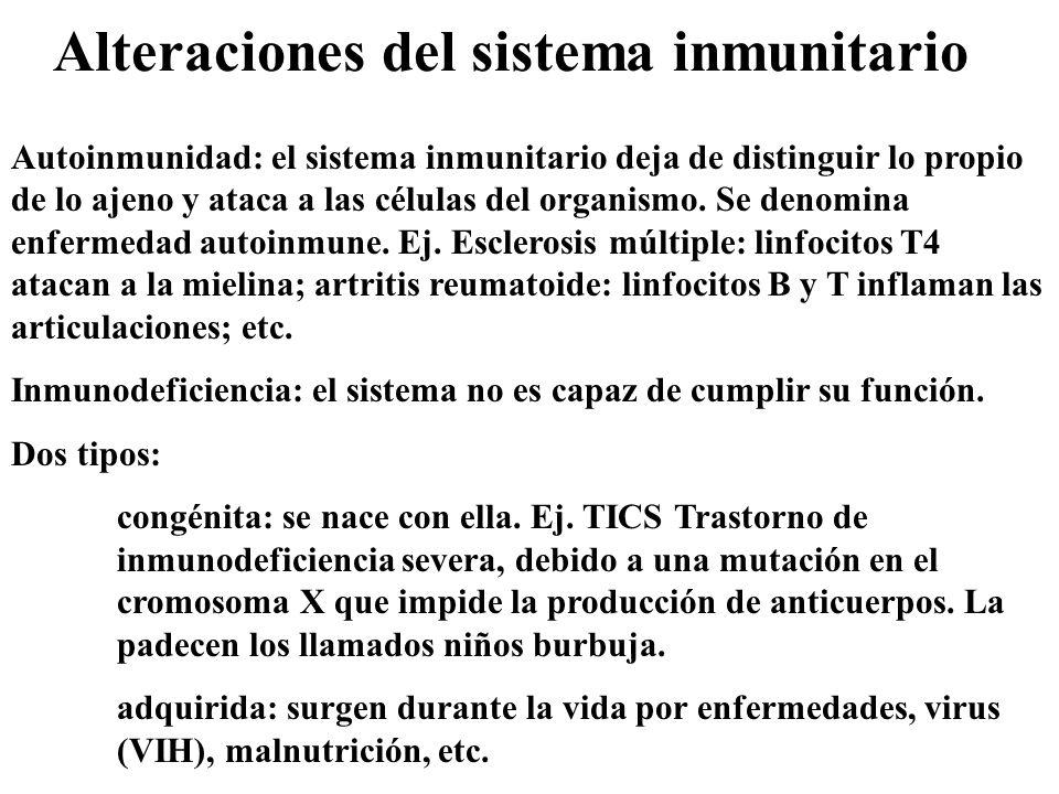 Alteraciones del sistema inmunitario Autoinmunidad: el sistema inmunitario deja de distinguir lo propio de lo ajeno y ataca a las células del organism