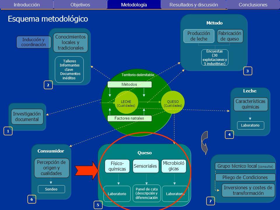 Conocimientos locales y tradicionales Talleres Informantes clave Documentos inéditos Características químicas Laboratorio Físico- químicas Sensoriales