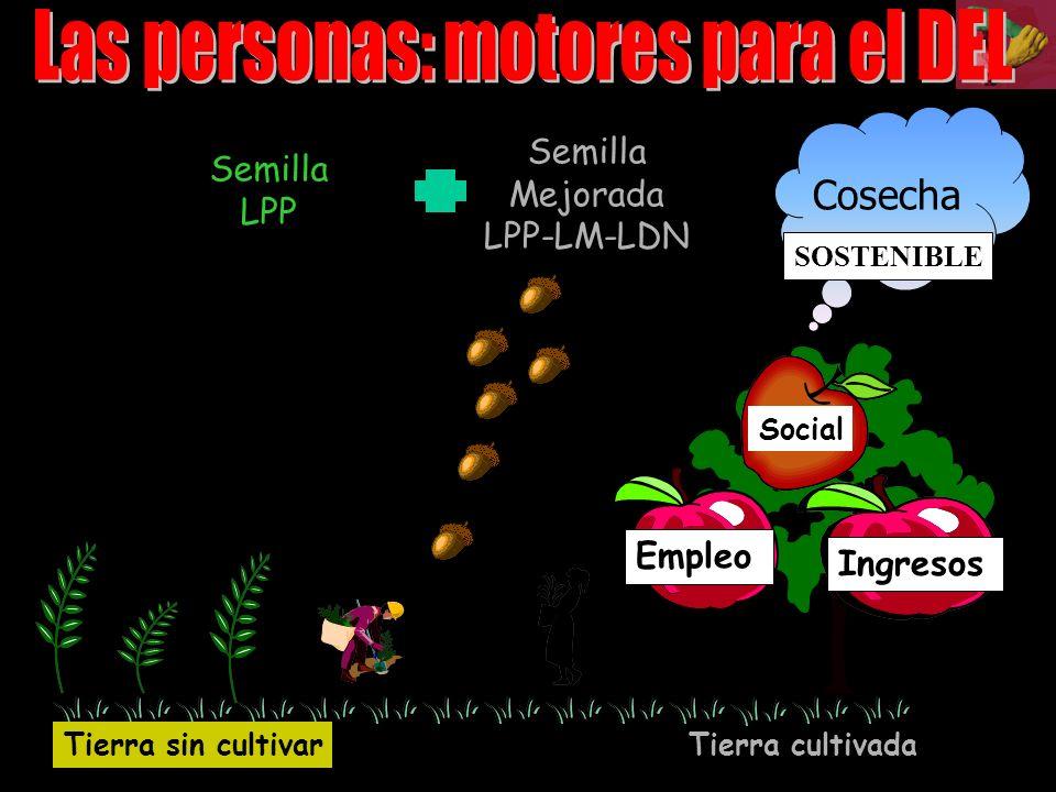 Semilla LPP Cosecha Social Tierra sin cultivar Tierra cultivada