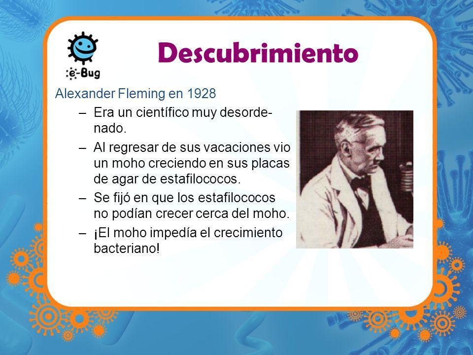 Descubrimiento Alexander Fleming en 1928 –Era un científico muy desorde- nado. –Al regresar de sus vacaciones vio un moho creciendo en sus placas de a