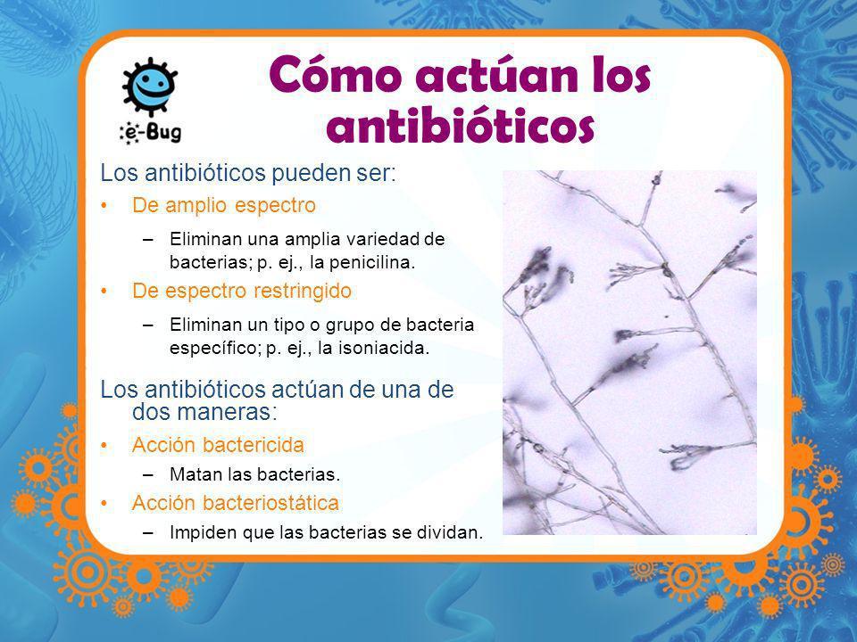 Cómo actúan los antibióticos Los antibióticos pueden ser: De amplio espectro –Eliminan una amplia variedad de bacterias; p. ej., la penicilina. De esp