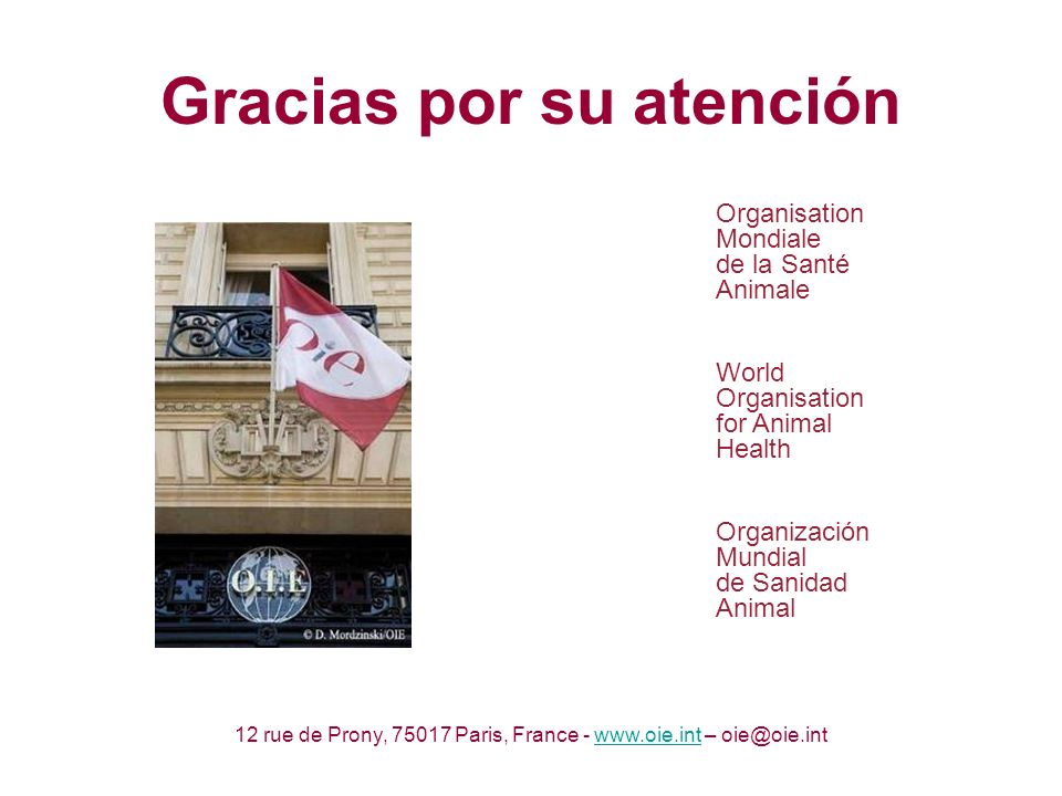 Gracias por su atención Organisation Mondiale de la Santé Animale World Organisation for Animal Health Organización Mundial de Sanidad Animal 12 rue de Prony, 75017 Paris, France - www.oie.int – oie@oie.intwww.oie.int