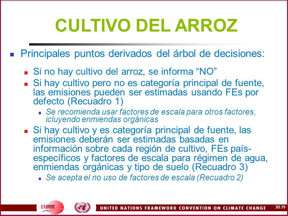3B.19 Principales puntos derivados del árbol de decisiones: Si no hay cultivo del arroz, se informa NO Si hay cultivo pero no es categoría principal d