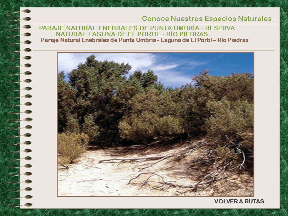 Conoce Nuestros Espacios Naturales PARAJE NATURAL ENEBRALES DE PUNTA UMBRÍA - RESERVA NATURAL LAGUNA DE EL PORTIL - RÍO PIEDRAS Paraje Natural Enebral