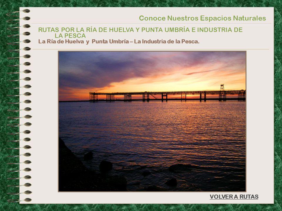 Conoce Nuestros Espacios Naturales RUTAS POR LA RÍA DE HUELVA Y PUNTA UMBRÍA E INDUSTRIA DE LA PESCA La Ría de Huelva y Punta Umbría – La Industria de