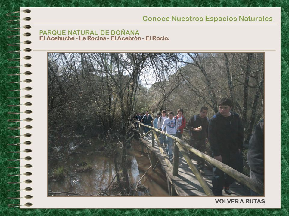 Conoce Nuestros Espacios Naturales PARQUE NATURAL DE DOÑANA El Acebuche - La Rocina - El Acebrón - El Rocío. VOLVER A RUTAS